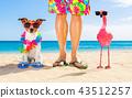 animal, beach, bird 43512257