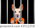 dog behind bars in jail prison 43512258