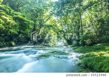 Kikuchi Valley的光點 43523490