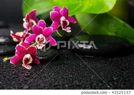 spa still life of zen massaging stones, orchid 43525137