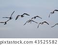 wild bird, bird, birds 43525582
