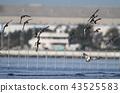 bird, birds, fowls 43525583