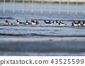 นก,สะพานพอนตูน,สัตว์ 43525599