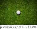 Golf ball on green grass in golf course 43531394