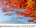 Fall of Japan Mt. Fuji and autumn leaves 43532287