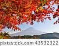 Fall of Japan Mt. Fuji and autumn leaves 43532322