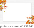 紅葉 楓樹 紅楓 43536241