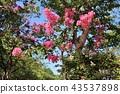 ดอกไม้,เบ่งบาน,ไม้ 43537898