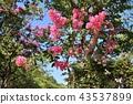 ดอกไม้,เบ่งบาน,ไม้ 43537899