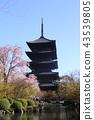 京都春天的Toji 43539805