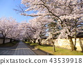 Daigoji寺在京都春天 43539918