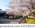 Daigoji寺在京都春天 43539919