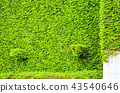 สภาพแวดล้อมทางธรรมชาติ蔦ผนังสวน 43540646