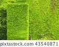 สภาพแวดล้อมทางธรรมชาติ蔦ผนังสวน 43540871