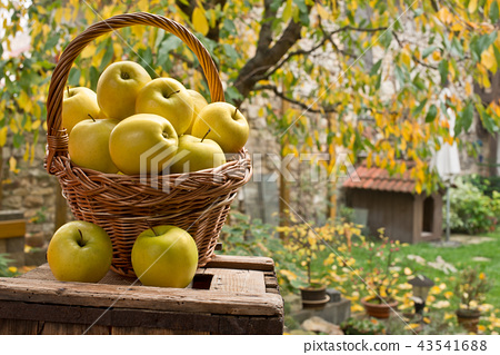 Basket with birds and apples made in Japan