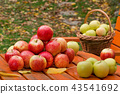 Red apples on the table in garden 43541692