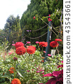 ดอกไม้,แปลงดอกไม้ 43543661