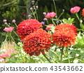 ดอกไม้,แปลงดอกไม้ 43543662