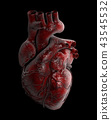 Human Heart - Anatomy of Human Heart 3d Illustration. 43545532