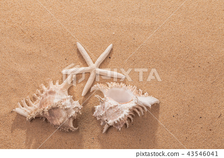 beach summer vacation background with starfish  43546041