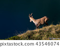 ibex animal wildlife 43546074