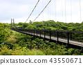 懸索橋 吊橋 杜鵑花 43550671