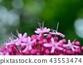 丁香牡丹文艺 花朵 花卉 43553474