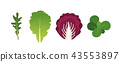 Mix of salad leaves. Arugula, lettuce, watercress and radicchio. Vector illustration set in flat 43553897