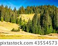 forest, hill, landscape 43554573
