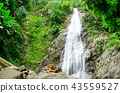 waterfall and lion 43559527