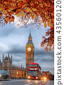 Autumn leaves with Big Ben in London, England, UK 43560120