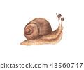Lovely little snail isolated on white background 43560747