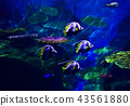 Colorful coral reef with many fishes  in aquarium  43561880