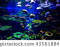 Colorful coral reef with many fishes  in aquarium  43561884
