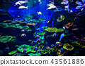 Colorful coral reef with many fishes  in aquarium  43561886