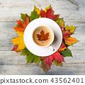 leaves, coffee, autumn 43562401
