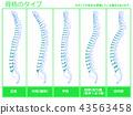 骨架類型5(綠色) 43563458