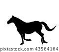 silhouette horse running 43564164