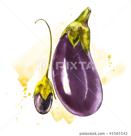 Eggplant. Hand drawn watercolor painting on white background. Watercolor illustration with a splash. 43565542