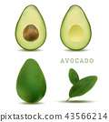 Whole and cut avocado isolated on white background 43566214