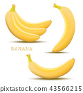 Vector banana. Bunches of fresh banana fruits 43566215