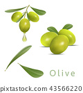 design for olive oil, natural cosmetics 43566220