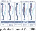 骨骼型脊柱(灰色) 43566986