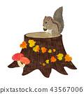 松鼠和樹樁 43567006