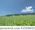 풍경, 경치, 야채 밭 43569692