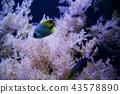 SEATTLE, WASHINGTON, USA - JAN 25th, 2017: Exotic coral fish in marine aquarium on blue background 43578890