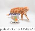 ลูกแมวและปลาทอง 43582923