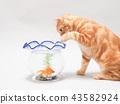 แมวตัวน้อยพยายามจับปลาทอง 43582924