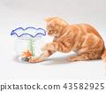 設法小的貓捉住金魚 43582925