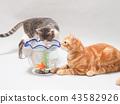ปลาทองและลูกแมวสองตัว 43582926